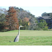 There are plenty of birds and alligators on the Hills course at Palmetto Dunes Resort.