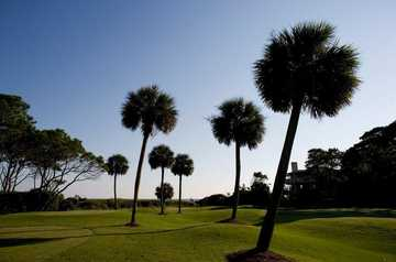 Ocean at Sea Pines Resort: #15
